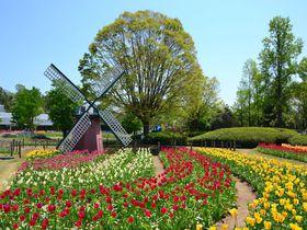 「兵庫県立フラワーセンター」で春のチューリップまつりを満喫!