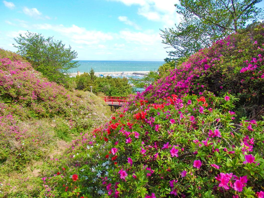 春には5万本のツツジが咲き誇る「あたご山」