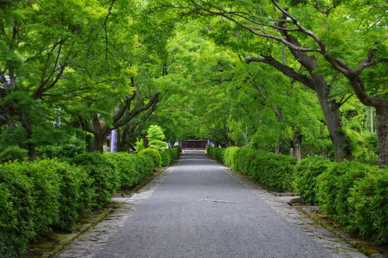 『麒麟がくる』主人公・明智光秀ゆかりの地 滋賀県「西教寺」