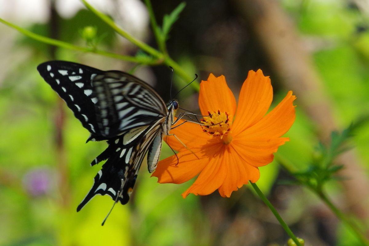 フラワーガーデンを飛び交う華麗な蝶も見逃せない