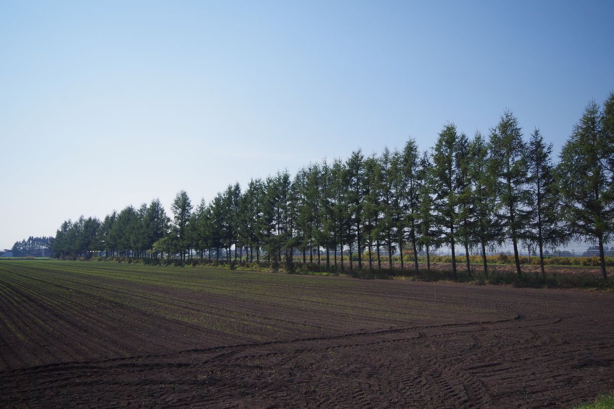 北海道芽室町にある日本一の長さの防風林