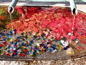 奈良・明日香「岡寺」の紅葉が美しい!もみじトンネルに三重宝塔も