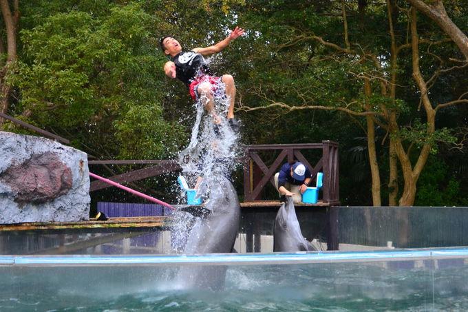 イルカの背中に乗って水上を疾走する世直し侍の雄姿
