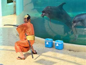 香川県・新屋島水族館の「イルカ劇ライブ」が面白すぎる!