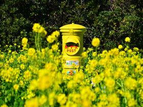 愛知「伊良湖菜の花ガーデン」で渥美半島の春の訪れを感じよう!