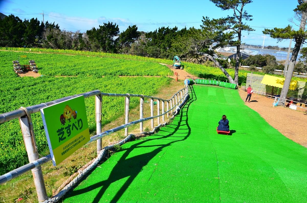 なっちの丘での「芝すべり」も楽しい