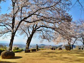 奈良県・春の明日香村で桜のお花見スポットめぐりを楽しもう!