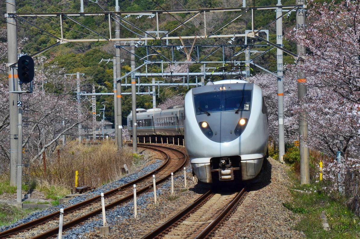 満開の桜並木を駆け抜ける列車が撮れる「山中渓駅」