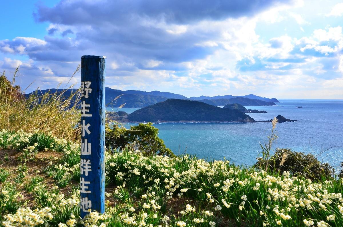 """由良町の花""""スイセン""""が楽しめる「番所山」"""