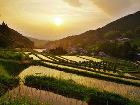 奈良県・明日香村で「稲渕」「上」「細川」3つの棚田を巡ろう
