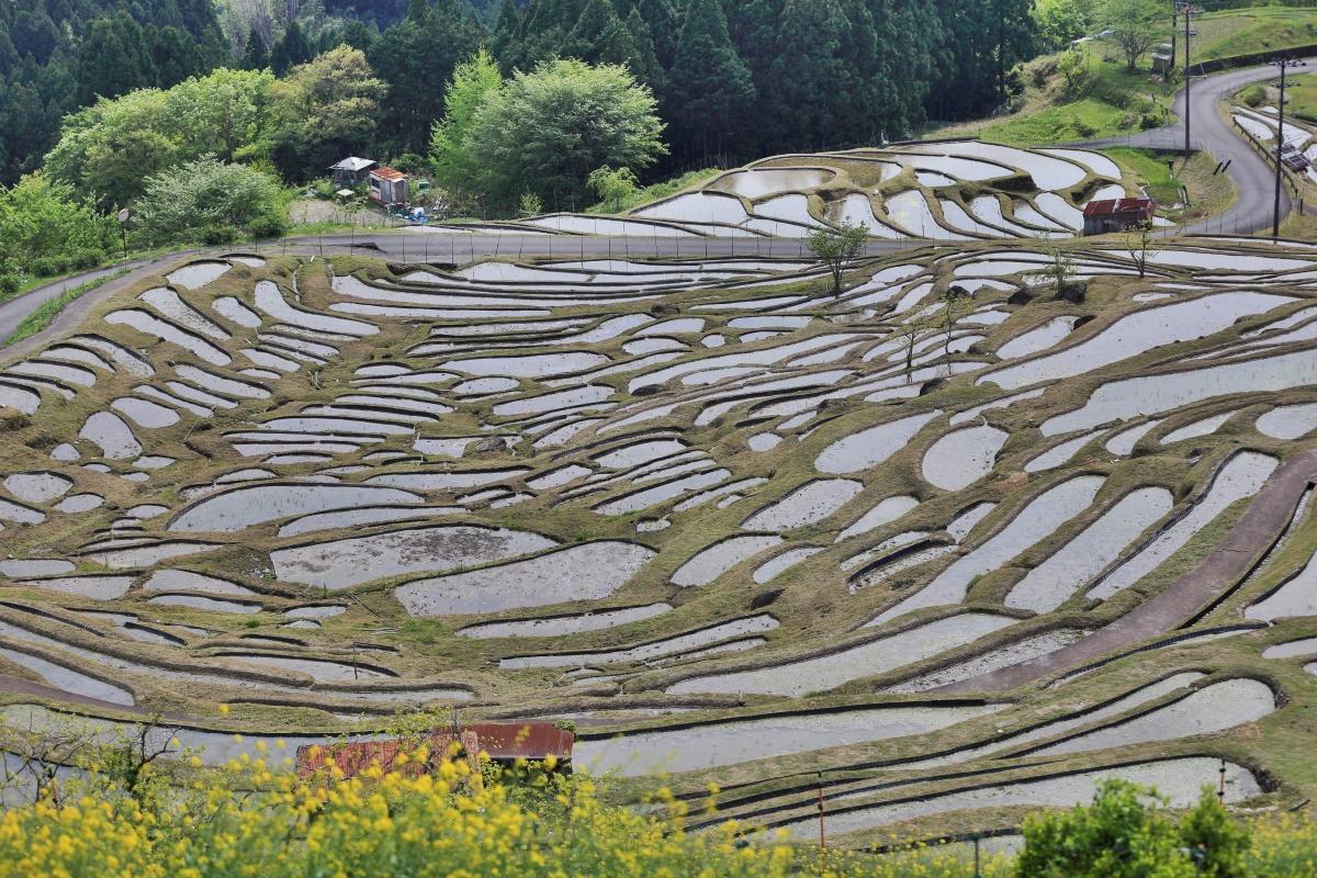 日本有数の美しい棚田「丸山千枚田」
