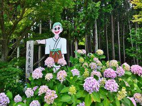境内に異なる2つの三重塔が!大阪「長慶寺」は紫陽花の名所