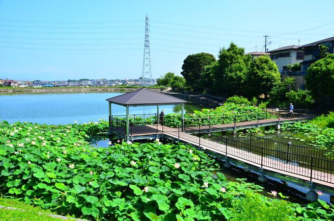 長池オアシスは、室町時代に造られた農業用ため池