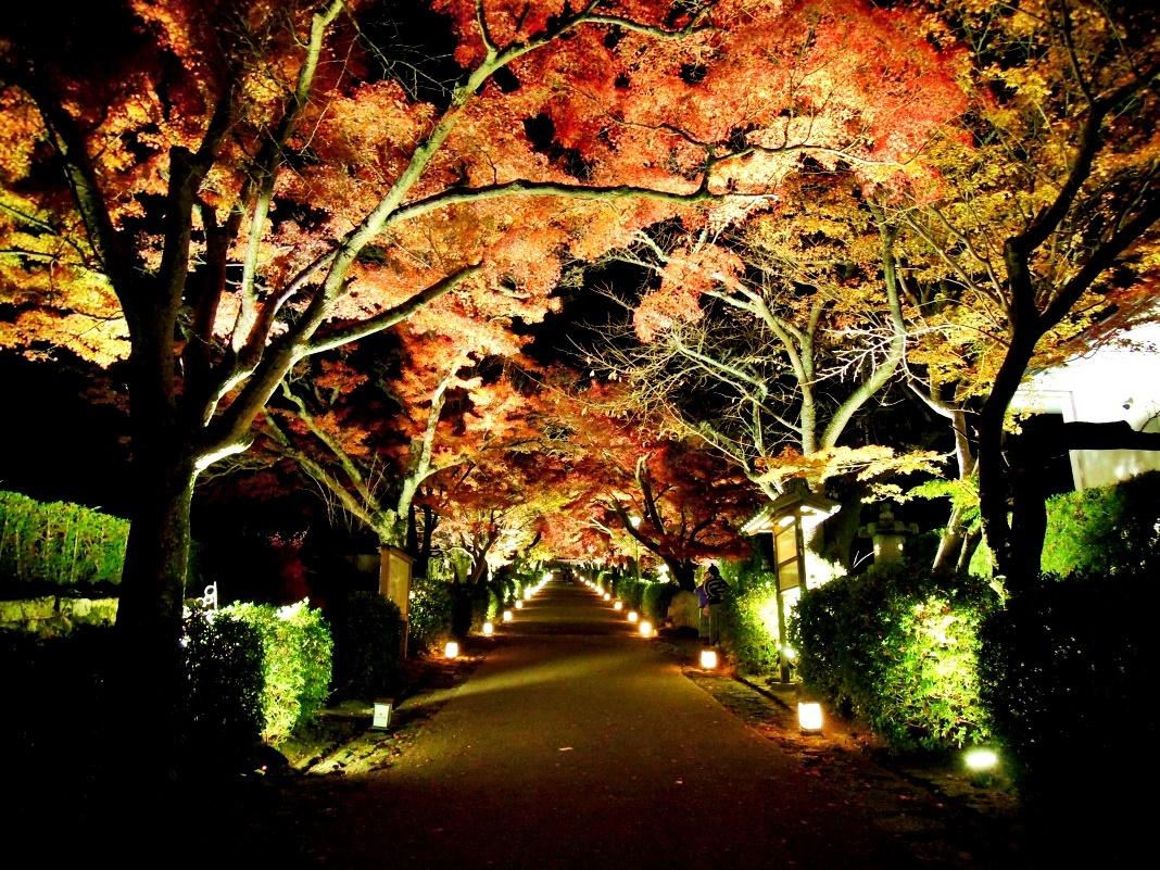 紅葉ライトアップも!滋賀・明智光秀ゆかりの「西教寺」の秋