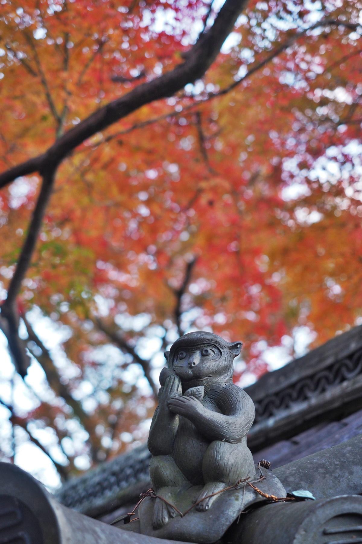 紅葉と「護猿」のコラボも撮ってみたい