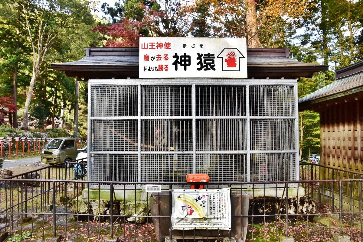 日吉大社の神様のお使いである「神猿(まさる)」とは