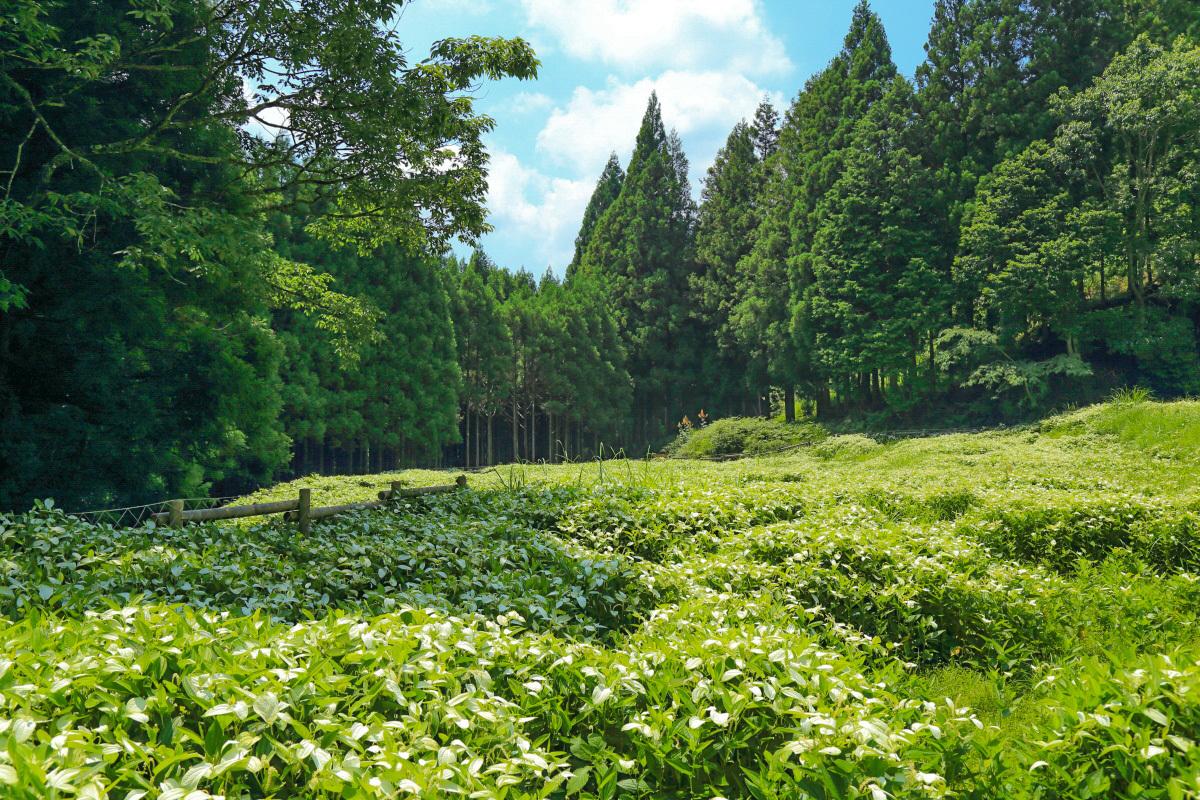御杖村の村名の由来となった「御杖神社」