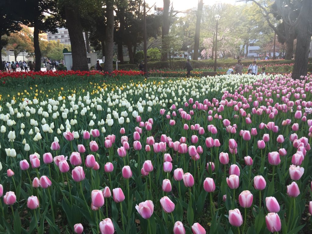 花と緑に囲まれた横浜のシンボル「ハマスタ」