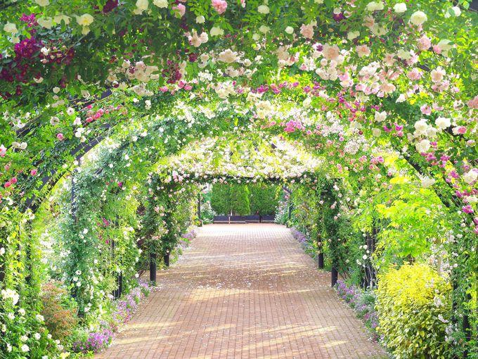 春のバラはやっぱりお勧め!ガーデンスタッフに相談も