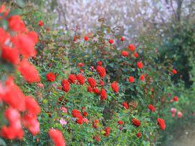 季節問わず楽しめる!「横浜イングリッシュガーデン」は都会の「秘密の花園」