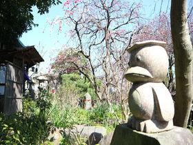 花と河童にほっこり癒されよう!神奈川県大和市「常泉寺」