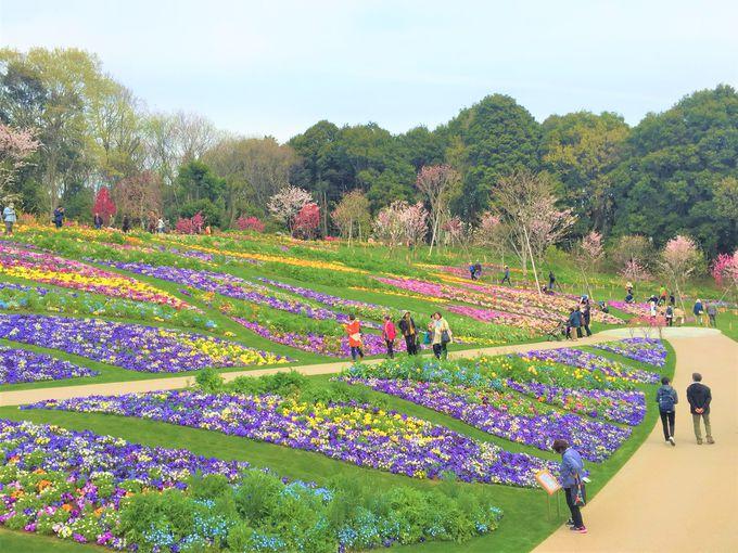 「みなとエリア」と「里山ガーデン」