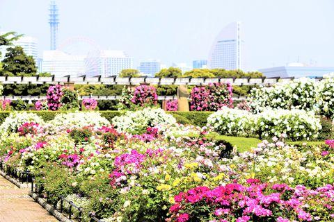 花と緑の競演!「ガーデンネックレス横浜2021」みなとエリア