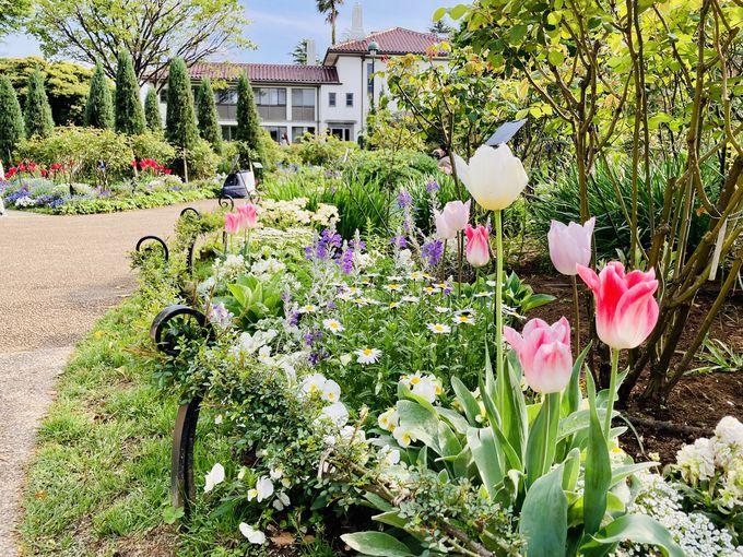 バラの英国式庭園が楽しめる「港の見える丘公園」