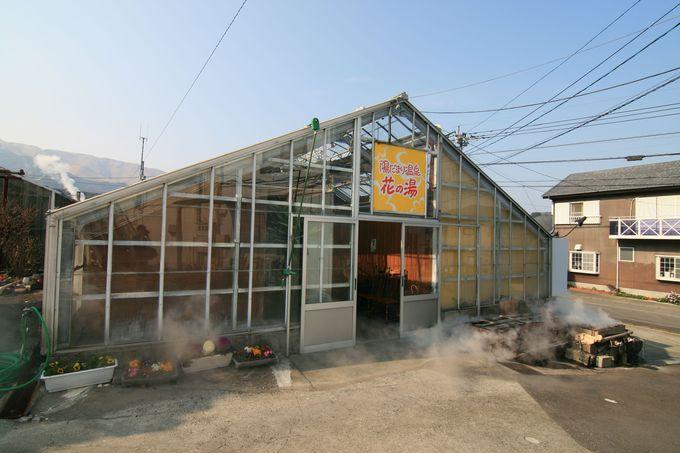 閑静な住宅街に現れる温室