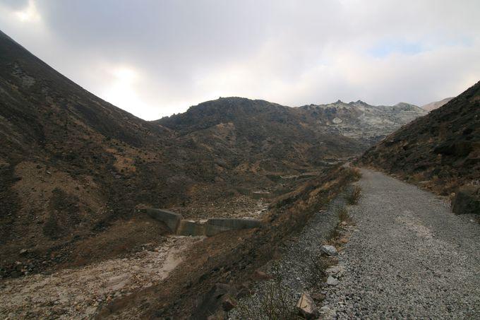坊がつる湿原までの登山道