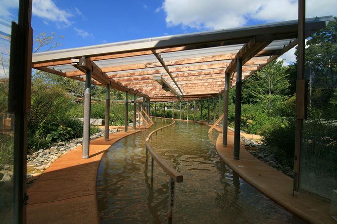 豊かな自然を楽しめる歩行浴