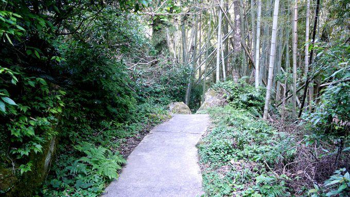 まずは、神秘の滝へ続く遊歩道で森林浴