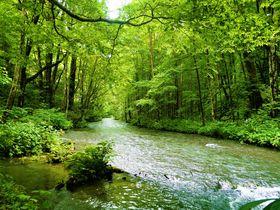 歩いて・感じて・見て・触って!とことん楽しむ奥入瀬渓流!