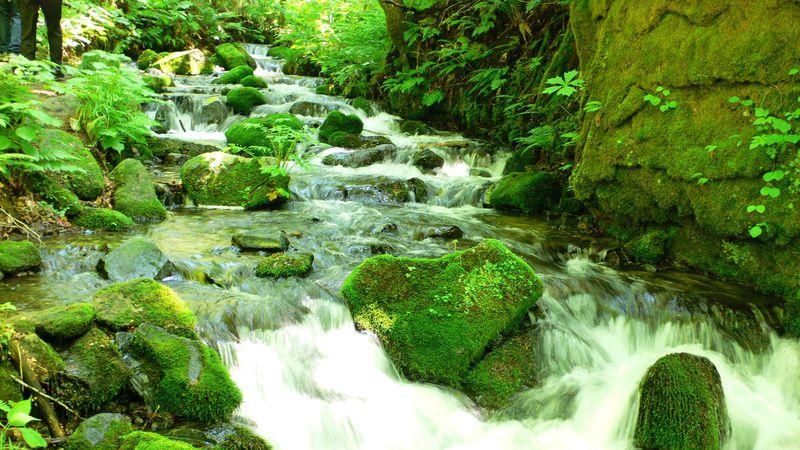奥入瀬渓流を2時間半で満喫!見どころ凝縮おすすめコース