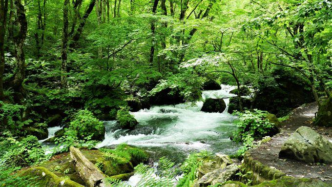渓流の静と動を感じる!