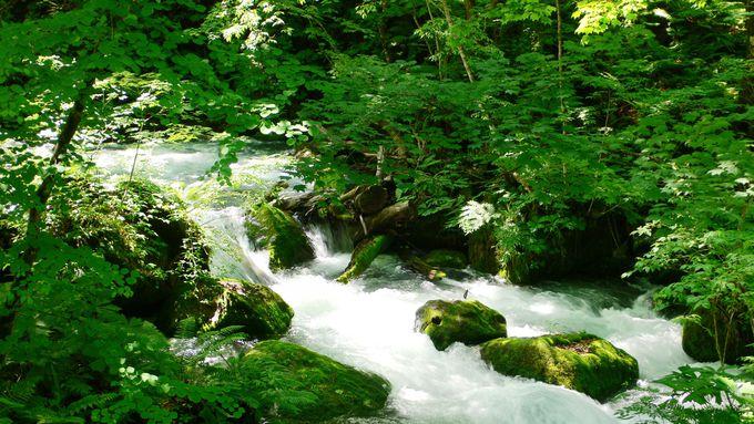 1.奥入瀬渓流