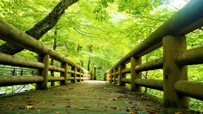 森の小道や木道などいろんな道を歩く!