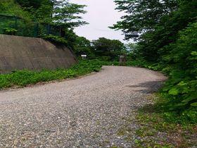 林道マニアにお勧めしたい!世界遺産・白神山地のマザーツリー詣で