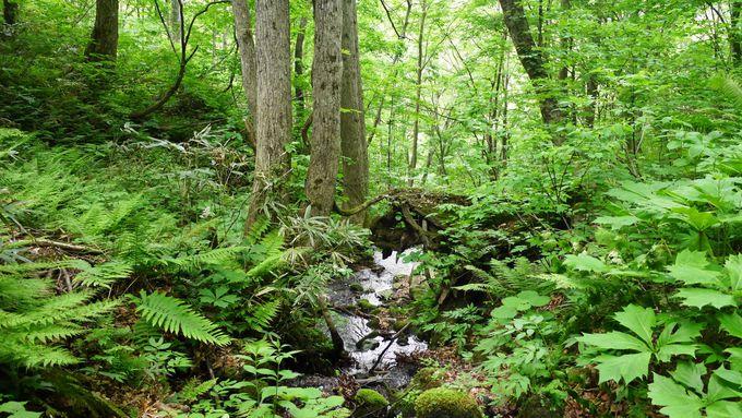 日本にたった4つしかない世界自然遺産のひとつ
