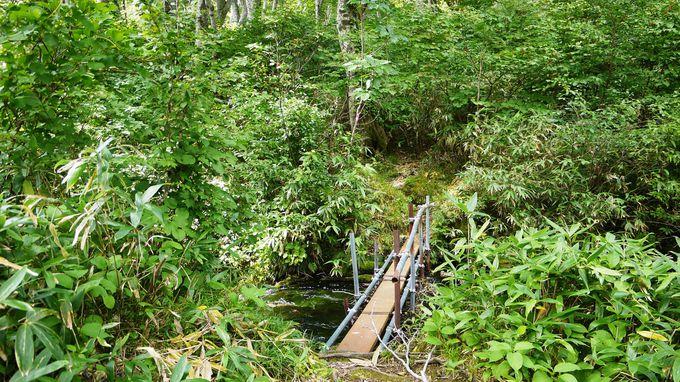 神秘の池「鶴間池」の水面は、まさに水鏡