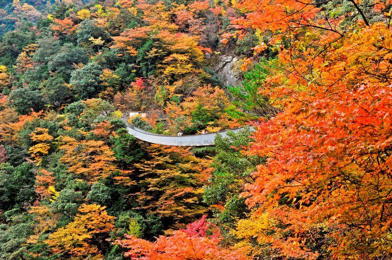 秘境の紅葉祭!熊本「五家荘」紅葉の名所トップ3   熊本県   LINE ...