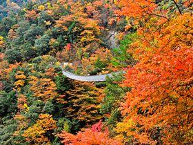 秘境の紅葉祭!熊本「五家荘」紅葉の名所トップ3