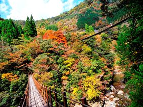 感動2倍!親子吊橋から眺める紅葉 熊本・五家荘の「樅木吊橋」