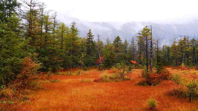 雨でいっそう映える「田代湿原」&「田代池」