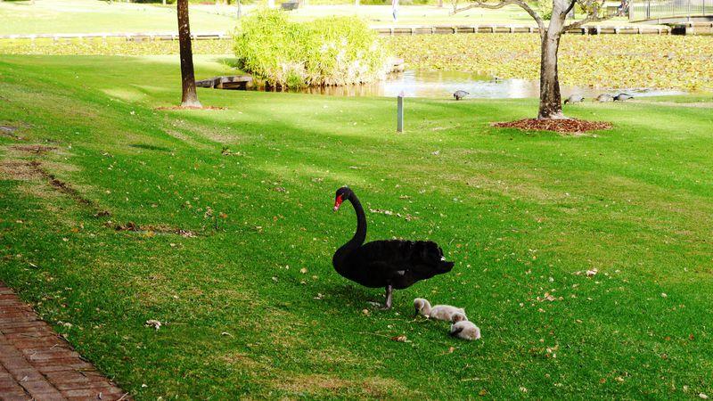 黒鳥やピーターパン像に会える都会のオアシス パース「クイーンズガーデン」