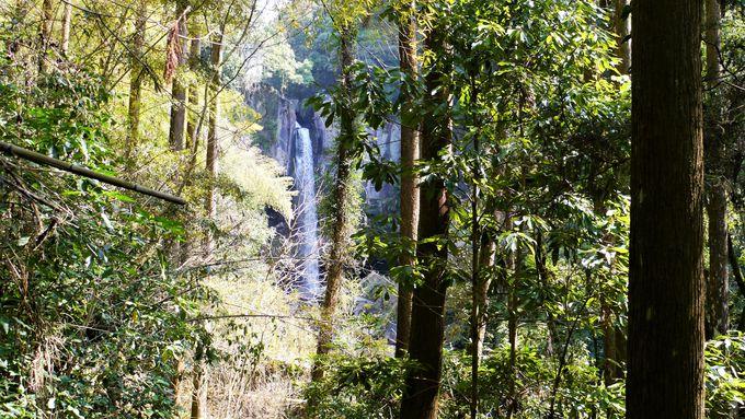 森林浴も楽しめる「遊歩道」