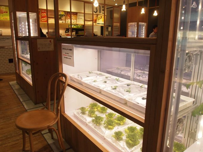 【意外な穴場店】グランフロントの北館2階奥の方にある『サブウェイ 野菜ラボ』