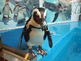 かわいすぎるっ!東京・池袋「ペンギンのいるバー」