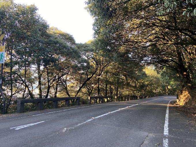 金華山の西麓から東麓を結ぶ「金華山ドライブウェイ」