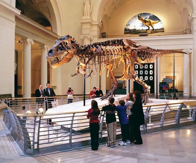 5. フィールド自然博物館で世界最大級の恐竜と出会う